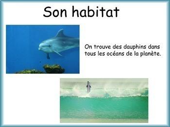 Les animaux: Le dauphin