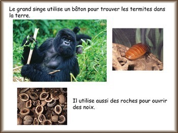 Les animaux: Le grand singe