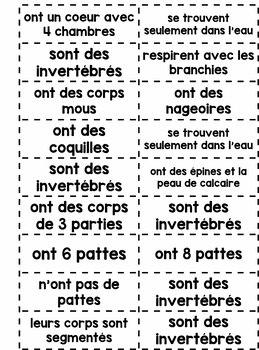 Les animaux (classifications) - Animals (en français)