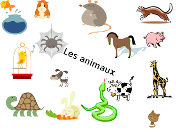 Les animaux (vocabulary presentation)