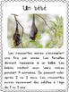 Les chauves-souris - textes non-fiction // non-fiction texts - Bats