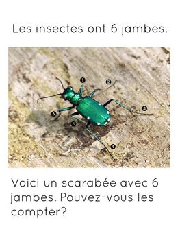 Les insectes // French Insects Unit