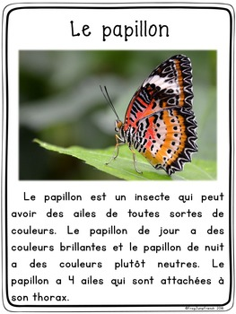 Les insectes - le papillon // French Butterfly FREEBIE