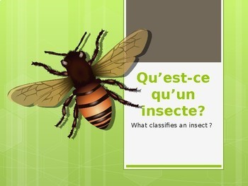 Les insectes PPT & activities elementary French science abeille bee fourmi ant
