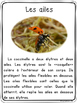 Les insectes - textes non-fiction // non-fiction texts - insects