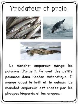 Les manchots - textes non-fiction // non-fiction texts - penguins