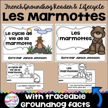 Les marmottes ~ Le cycle de vie ~ French Groundhogs Reader & Lifecycle