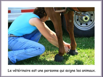 Les métiers de la communauté - le vétérinaire