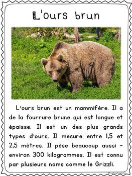 Les ours - textes non-fiction // non-fiction texts - bears