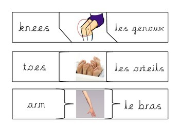 Les parties du corps- French Body Parts Matching Game