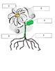 Les plantes- Jeu de fleur- French Vocabulary (Parts of the Plant)
