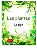 Les plantes- La tige (Investigation of function of the stem)