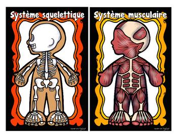 Les systèmes du corps
