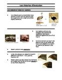 Les theories d'evolution