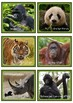 "Lesekiste ""Gefährdete Tierarten an Land"""