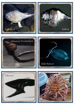 """Lesekiste """"Kreaturen der Tiefsee"""""""