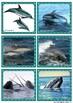 """Lesekiste """"Wale und Delfinde"""""""