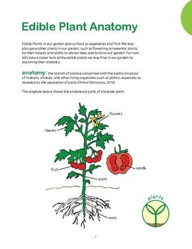 Lesson 1: Plant Anatomy and Classification