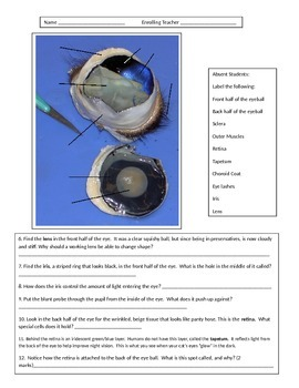 Lesson 19 Eye Dissection Absent students Handout