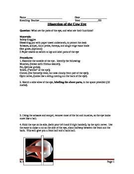 Lesson 19 Eye Dissection Lab Worksheet
