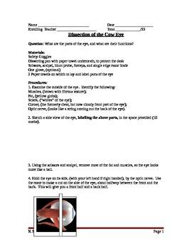 Lesson 19 Eye Dissection Lab Worksheet