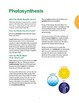Lesson 2: Photosynthesis and Food Chains