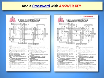 Respiratory System Lesson 3 - PowerPoint, Notes, Quiz & Crossword {EDITABLE}