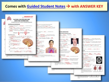 Respiratory System Lesson 4 - PowerPoint, Notes, Quiz & Crossword {EDITABLE}