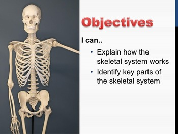 Lesson Bundle : Skeletal System PowerPoint and 9 Independe