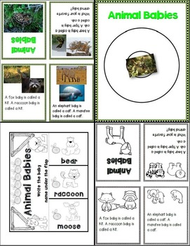 Lessons in a Jiffy: Baby Animals (Nonfiction/Shared/ Guided Reading)
