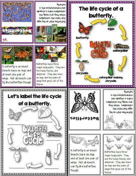 Lessons in a Jiffy: Butterflies (Guided/Shared Reading Books and more!)