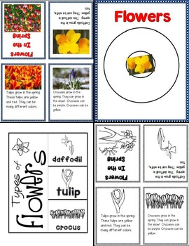 Lessons in a Jiffy: Flowers in Spring (Guided/Shared Reading Books, activites)