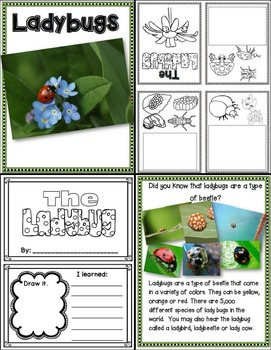 Lessons in a Jiffy: Ladybugs (Guided/Shared Reading Books and activites)