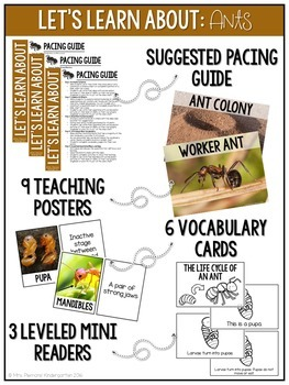 Life Cycle of an Ant Nonfiction Science & ELA Unit
