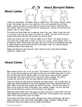 Let's Learn About Barnyard Babies