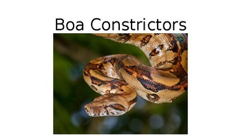 Let's Learn About Jungle Animals -L2- Boas, Python, Tree and Venomous Snakes