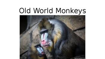 Let's Learn About Jungle Animals -L4- Monkeys and Lemurs