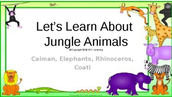 Let's Learn About Jungle Animals -L8- Caiman, Elephant, Rhinoceros, Coatis