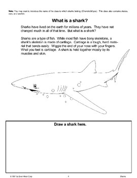 Let's Learn About Sharks