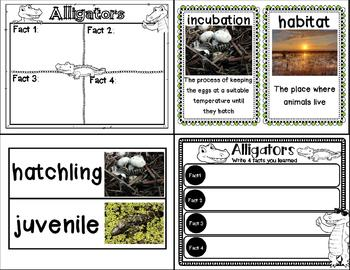 Let's Learn about it with QR Codes! Alligators