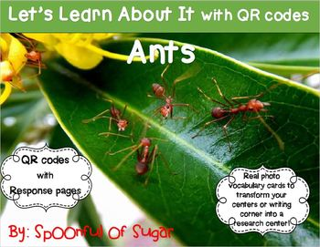 Let's Learn about it with QR Codes! Ants
