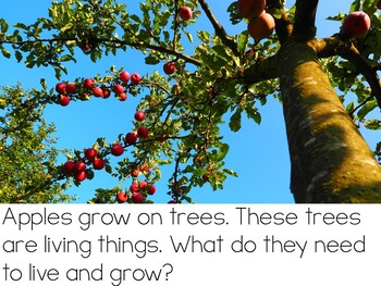 Let's Talk About Apples: Interactive Read-Aloud PowerPoint