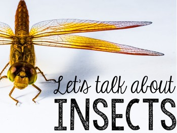 Let's Talk About Insects: Interactive Read-Aloud PowerPoint