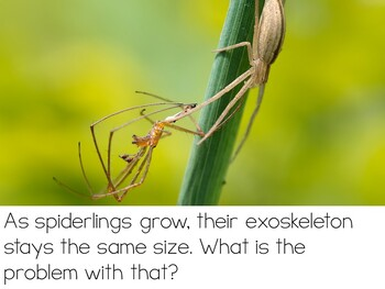 Let's Talk About SPIDERS: Interactive Read-Aloud PowerPoint