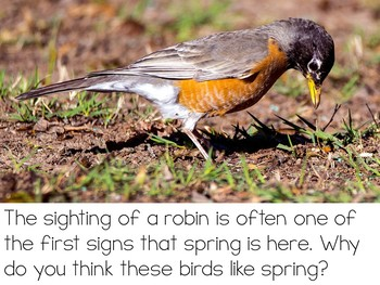 Let's Talk About Spring: Interactive Read-Aloud PowerPoint
