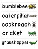 Let's Write Insect Words!