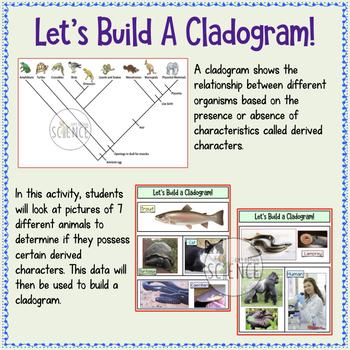 Cladogram Activity: Build a Cladogram (Classification, Taxonomy, Cladistics)