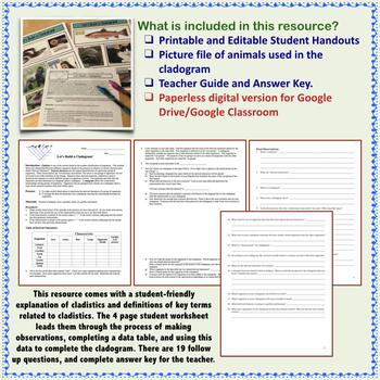 Let S Build A Cladogram Answers