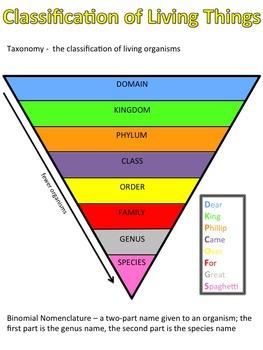 Let's Build: Levels of Classification Bundle