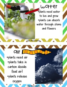 Project Based Learning Plants Life Cycles
